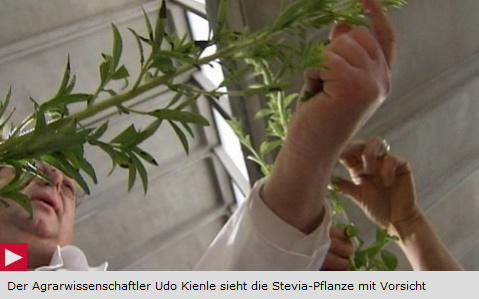 Interessanter Bericht über Stevia auf 3sat aus dem Jahr 2001